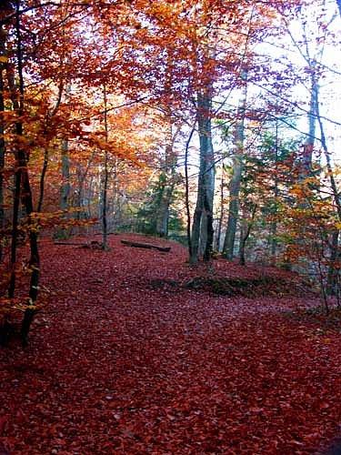 autumn2.jpg