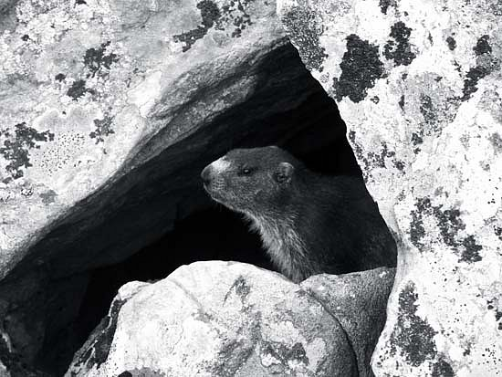 SeryLaly-marmotte.jpg