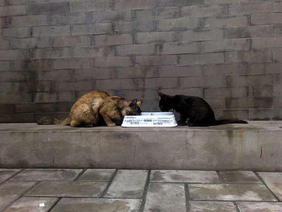 18-cats.jpg