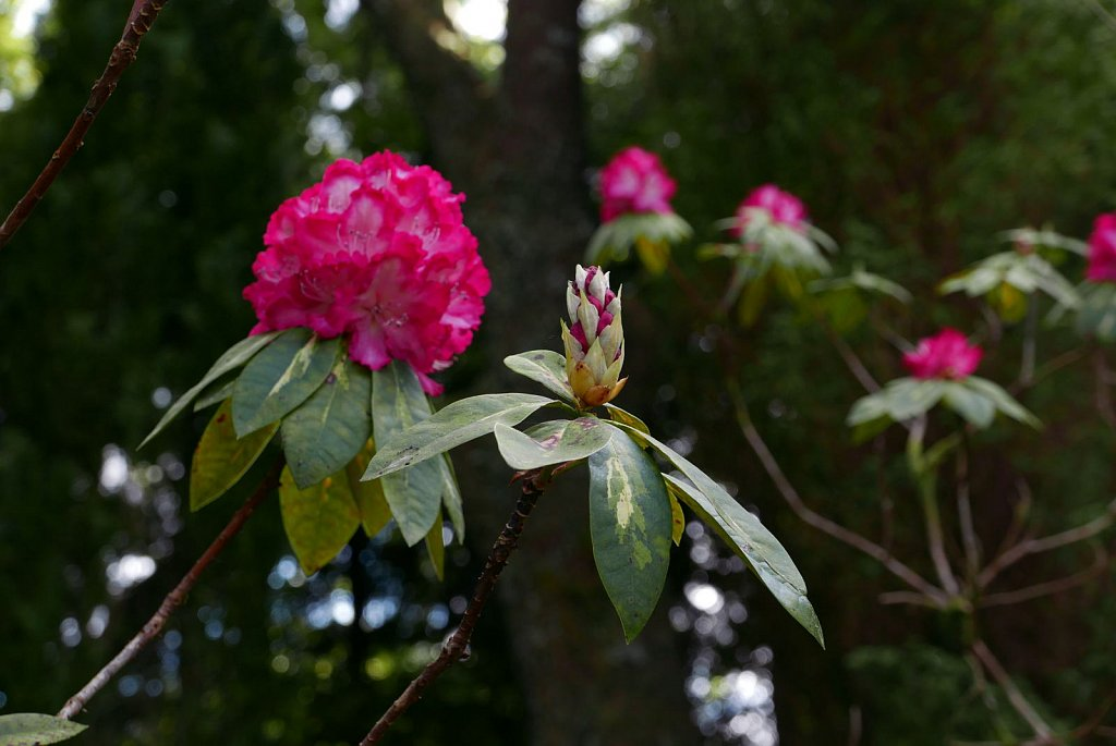 2019-04-29-angus-garden.jpg