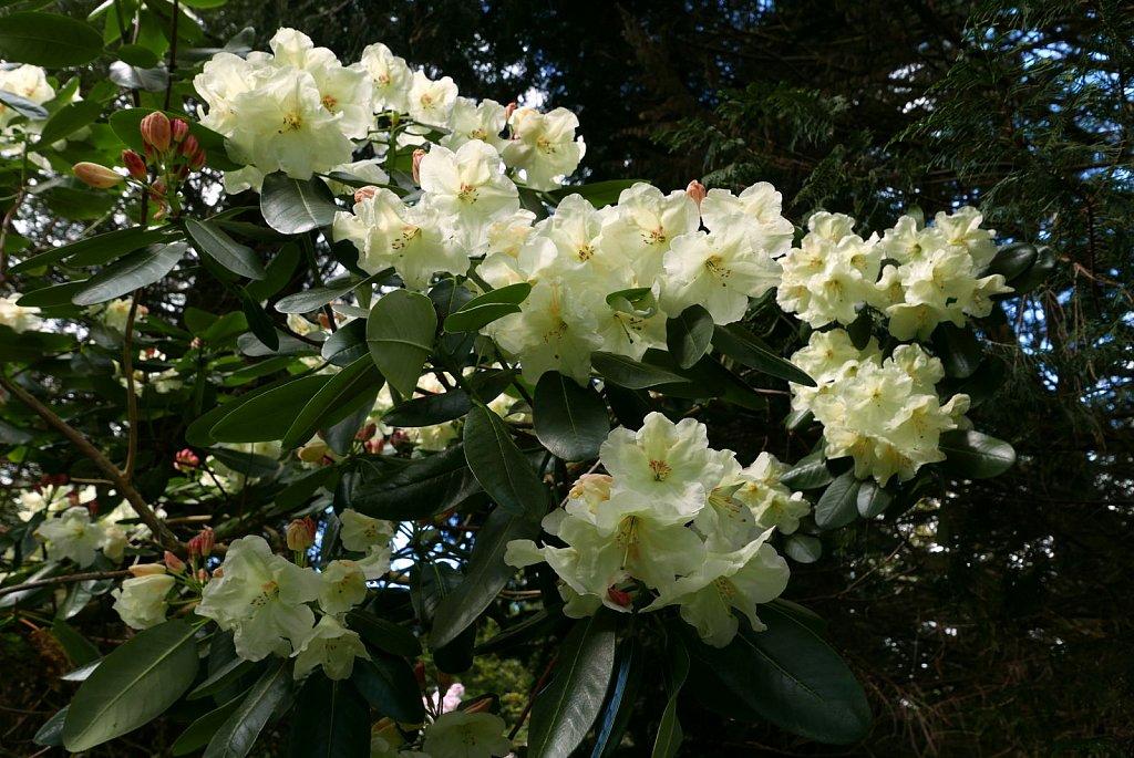 2019-04-29-angus-garden1.jpg