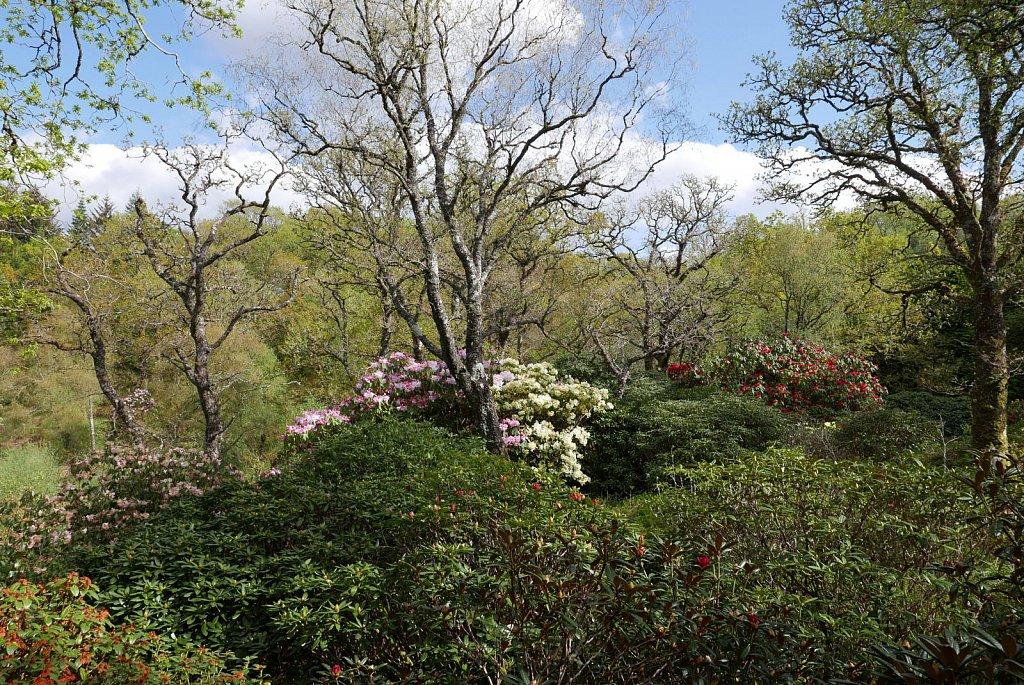 2019-04-29-angus-garden20.jpg