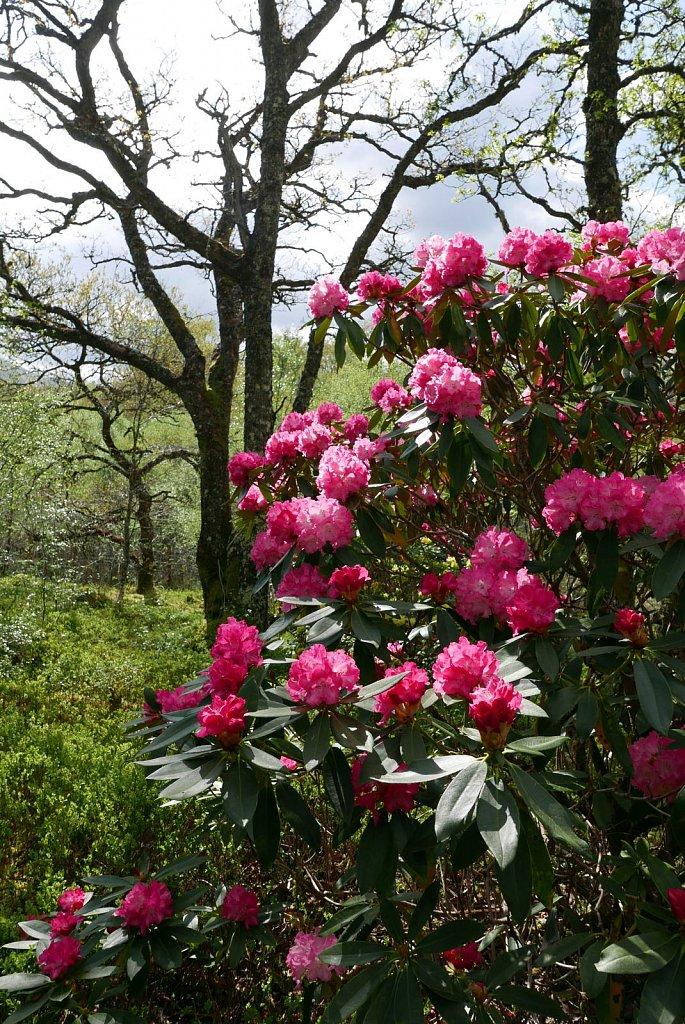 2019-04-29-angus-garden21.jpg